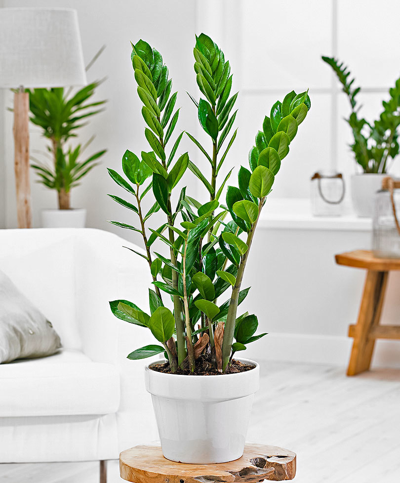 7 Succulent Types That Beautify Your Home