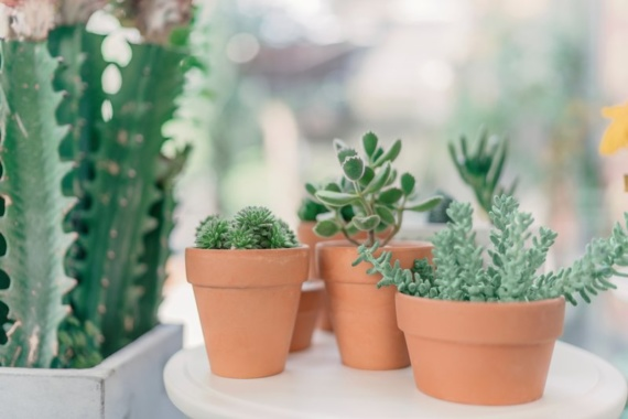 5 Ways To Kill Your Succulents And How To Avoid Them